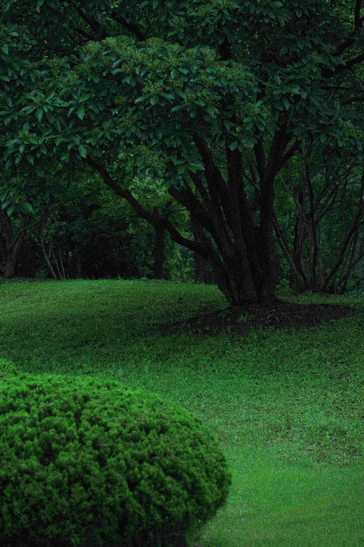 徽园小憩 一览夏日的绿